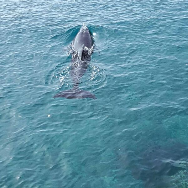 Delfin im offenen Meer